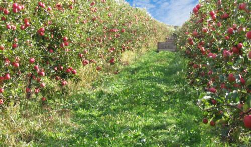 Pomme-Joya---Écoresponsable,-et-durable-et-pleine-d'amour